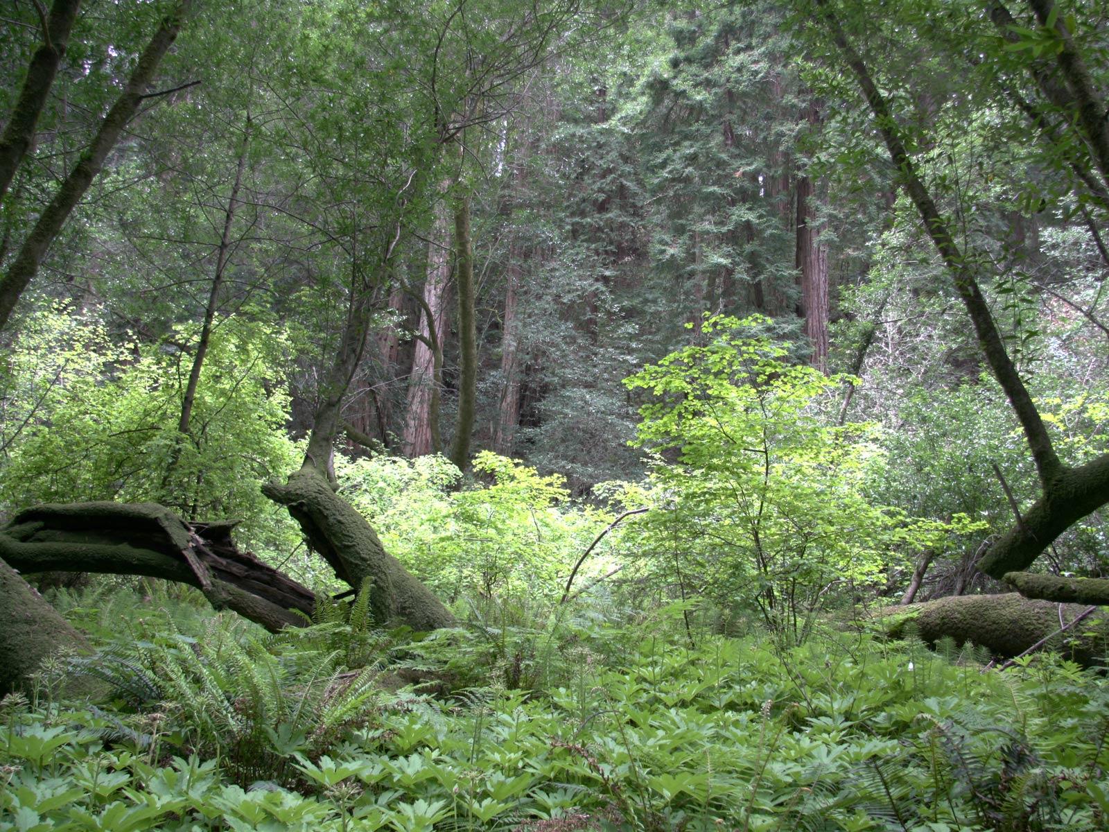 Tadhg Com U00bb Muir Woods HDR Photos