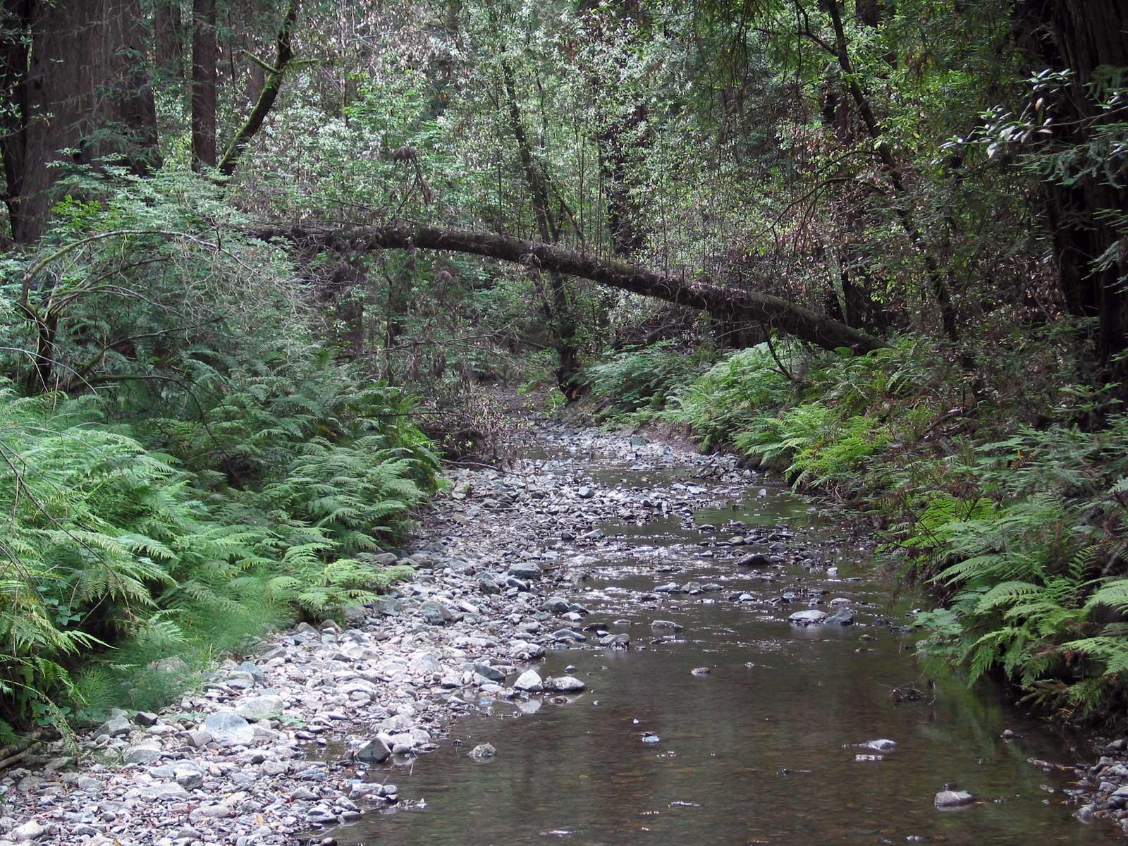 Tadhg Com 187 Muir Woods Photos